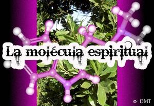 dmt molecula espiritual