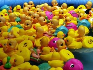 rubber-ducks-300x225